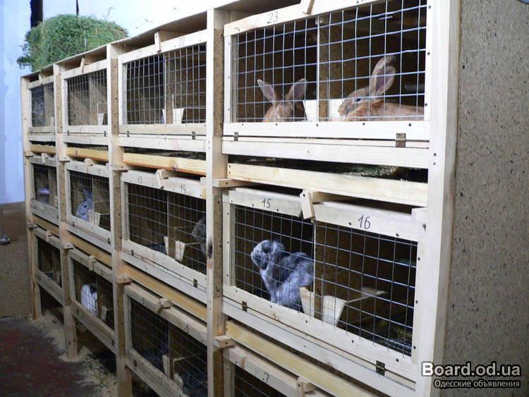 Клетки для кроликов своими руками картинки