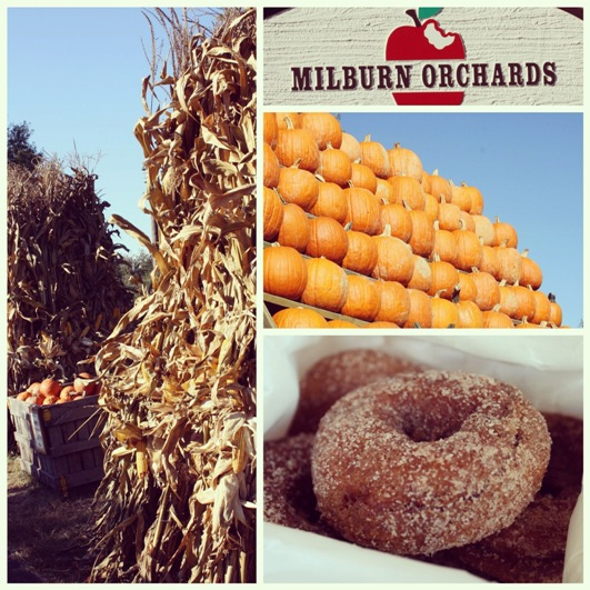 Milburn Orchard