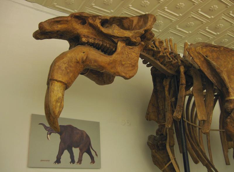 Киев. Национальный научно-природоведческий музей Академии наук Украины (часть 1)