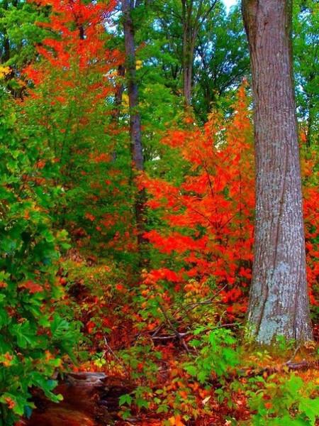 Осень красная