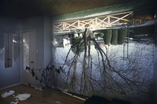 03_ash_tree_in_room-610x405-600x398