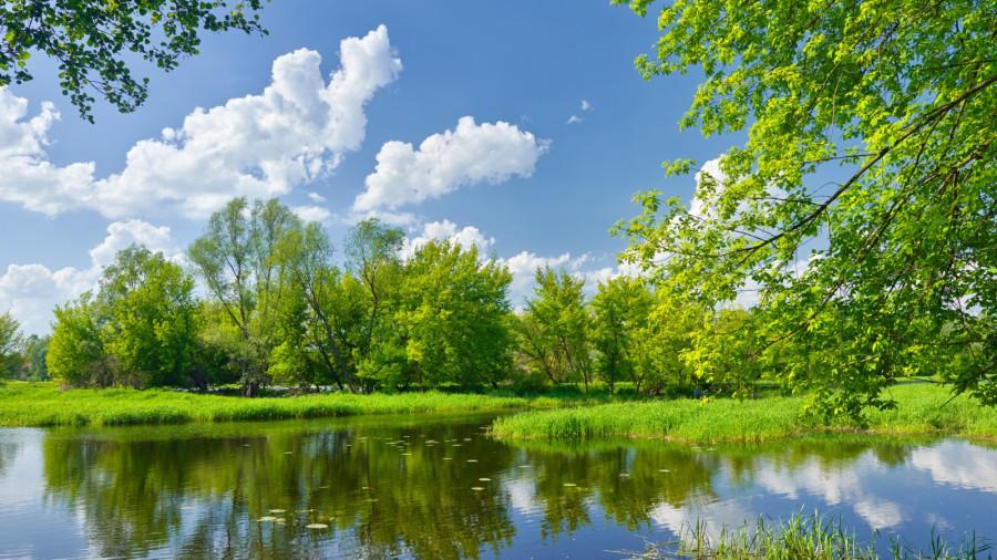 peyzazh-priroda-derevya-zeleno (1)
