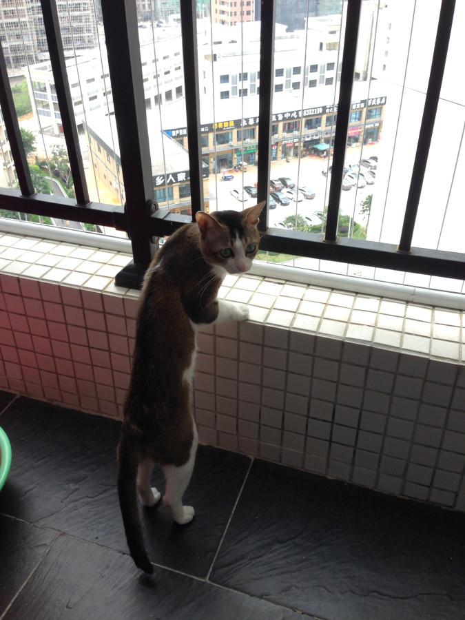 По двору бежит кот васька