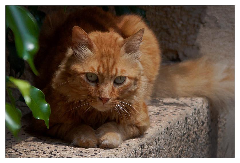 Tel-Aviv-cat