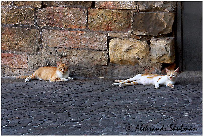 jerusalem-cats
