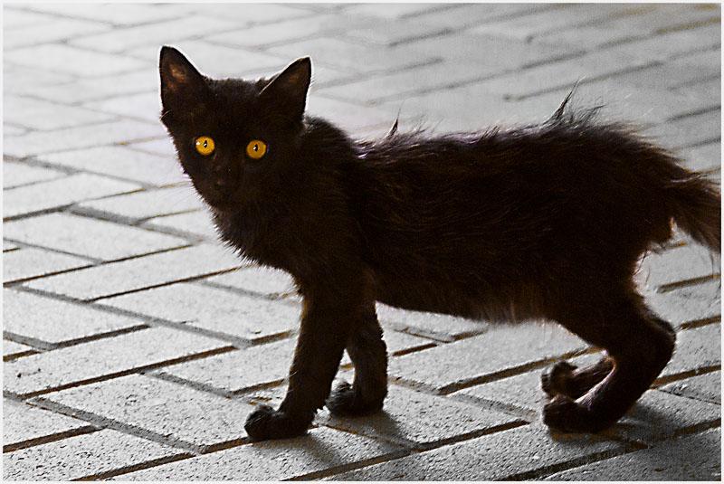 t-a-cat-2