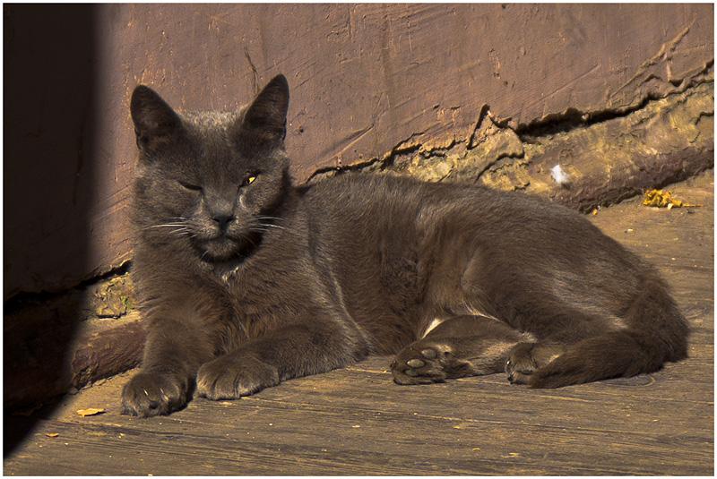 800-cat