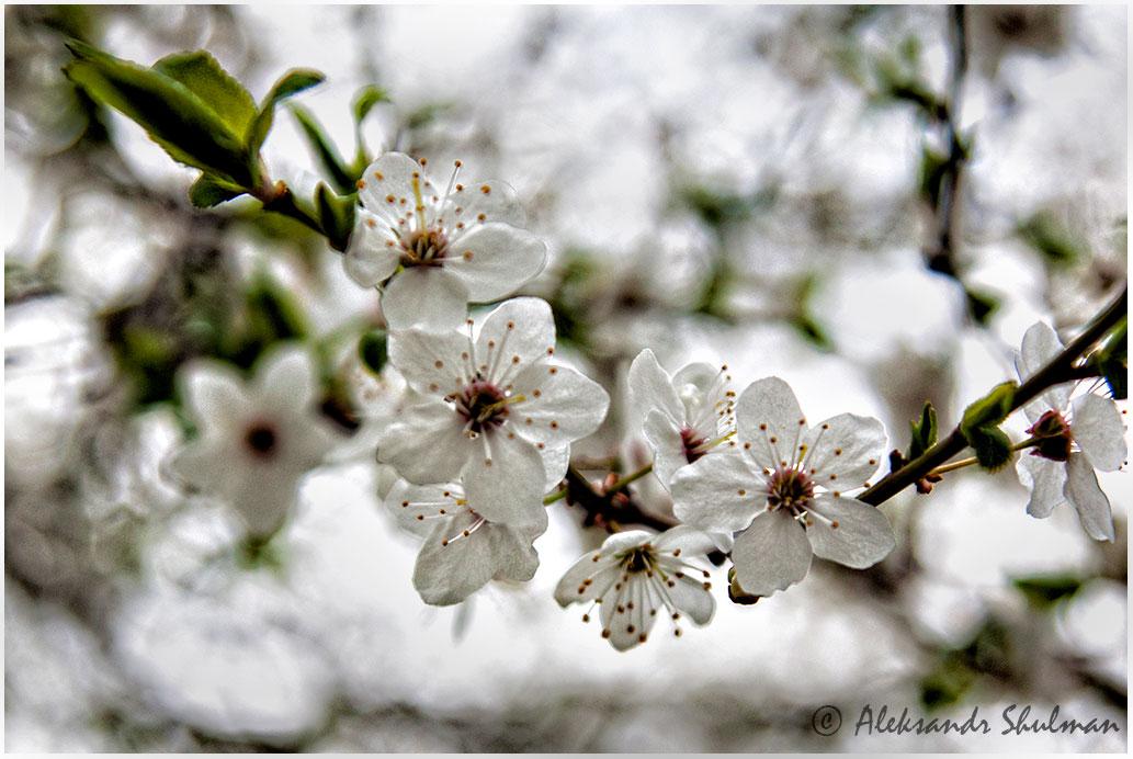 web-1024-spring