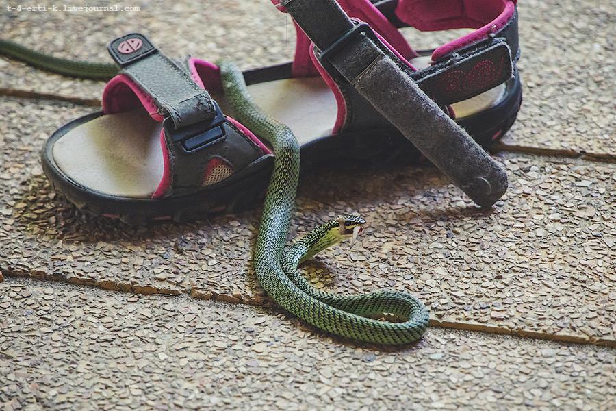 Snakey (10).jpg