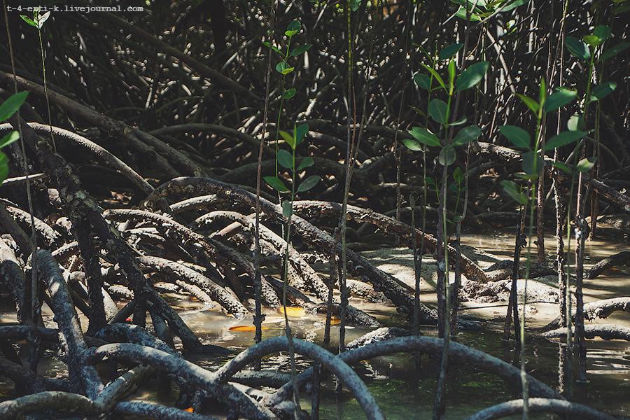 Krabi Islands (25).jpg