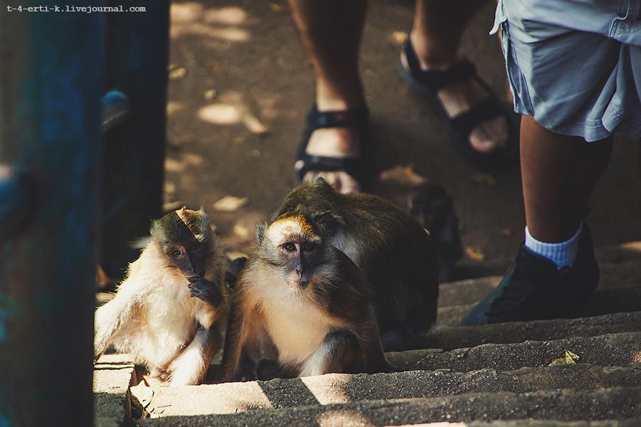 Krabi_tiger temple (25).jpg