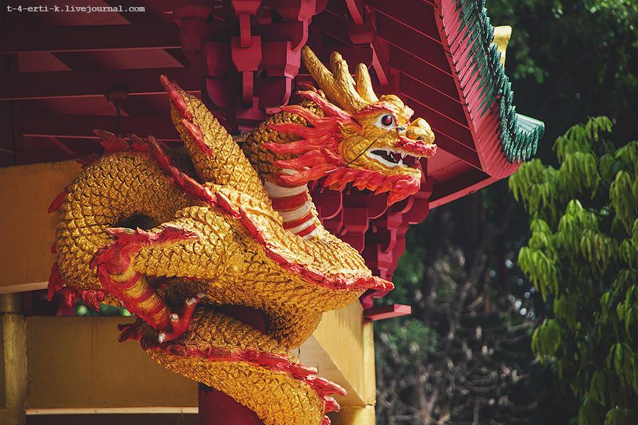 Krabi_tiger temple (28).jpg