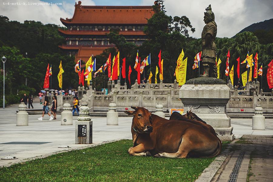 HongKong_Big_Buddha (52).jpg