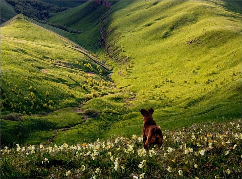 горы_собака