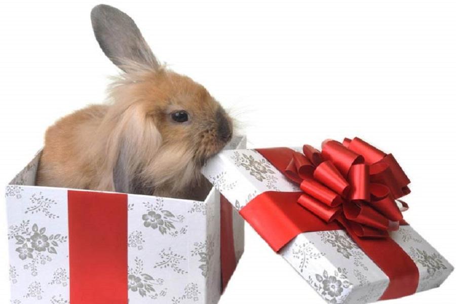 Открытки с днем рождения с кроликом, надписями