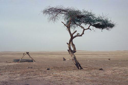 Tenere_tree_01