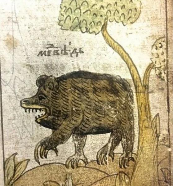 Беседы о русской литературе и внезапно медведь