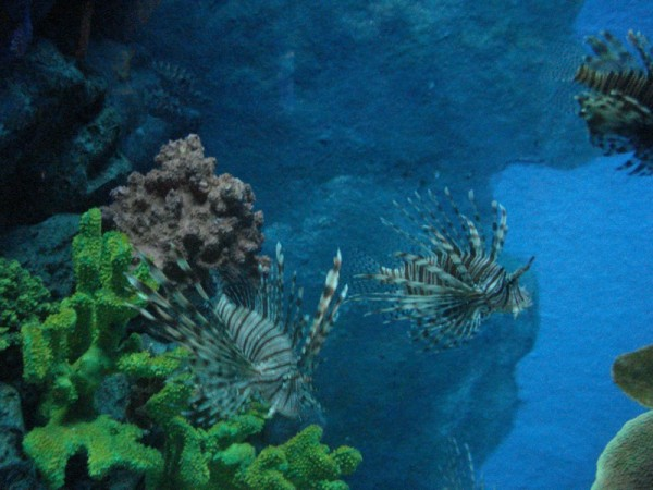 океанариум 1 зал2