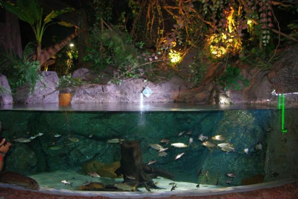 океанариум парк юрского периода
