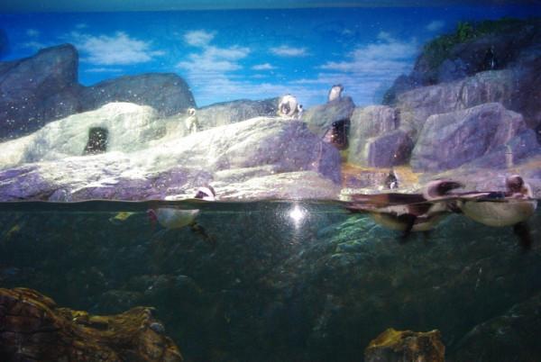 океанариум пингвины