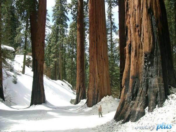 Национальный парк секвойи, США.