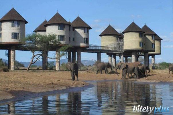 Отель в Кении рядом с водопоем, у которого можно наблюдать за животными.