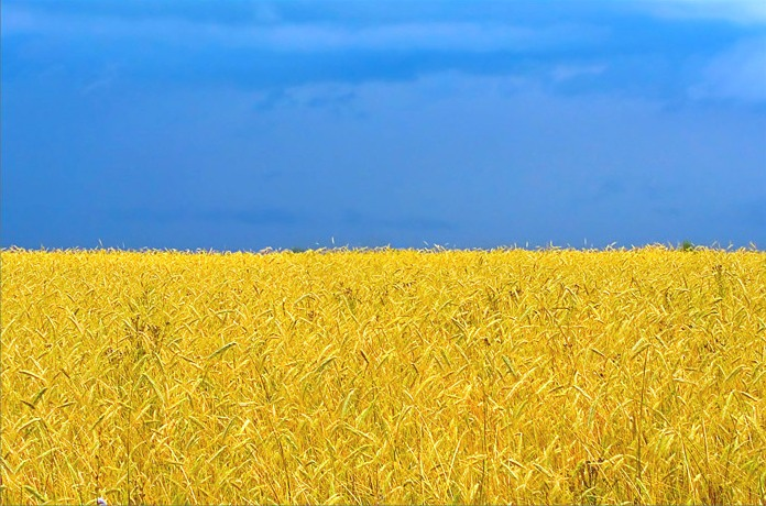 поле и небо