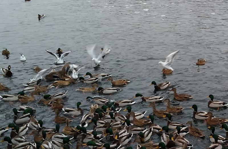 Озеро то замерзало, то оттаивало.