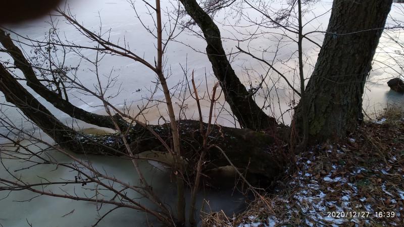 Замерзшие берега украшает самоповал или просто красивые и витиеватые стволы ольхи или коряги.