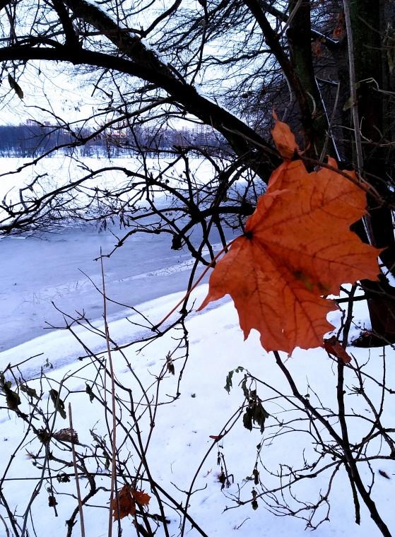 и, как память о недавней осени — кленовый желто-оранжевый листочек,