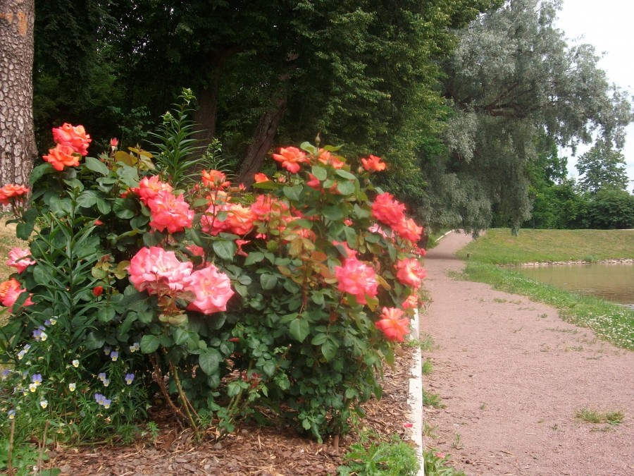 Дело про розы ) ...