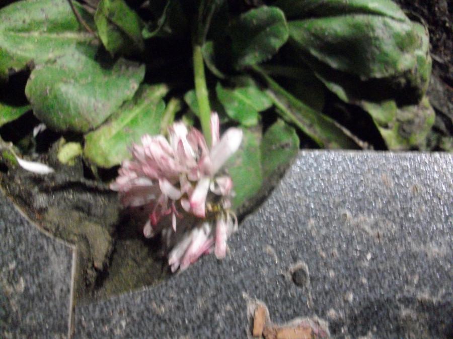 В Питере зацвели цветы )