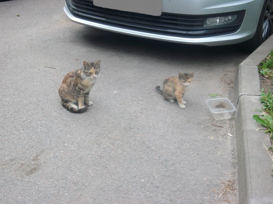 Они разбегаются)...