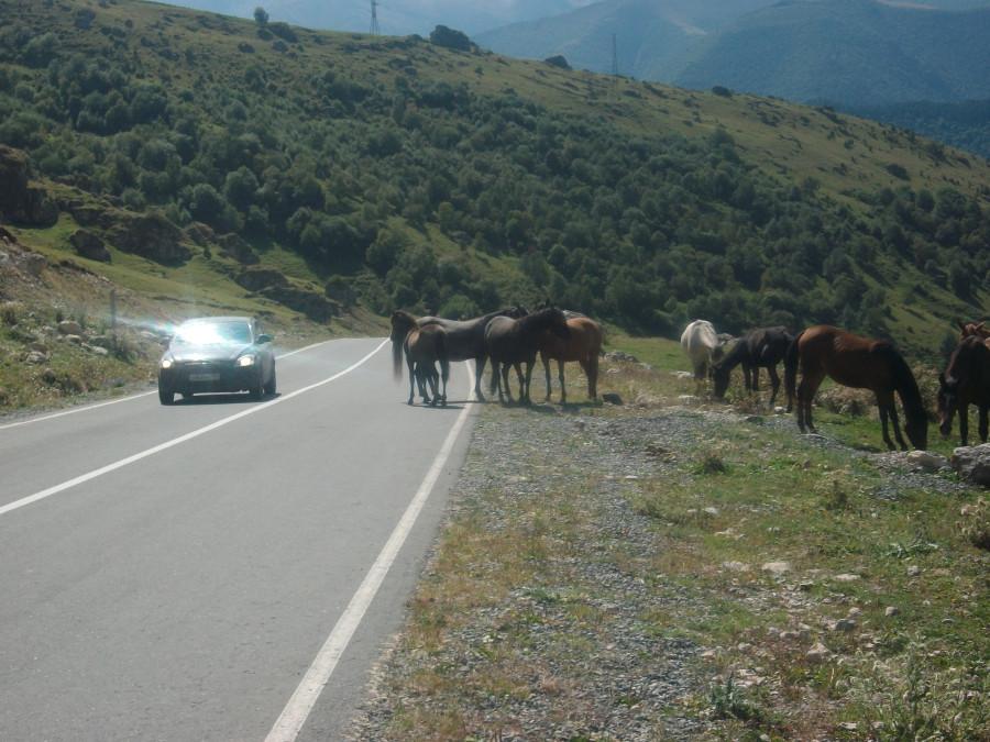 Горы и лошади-это Ингушетия... Ингушетия
