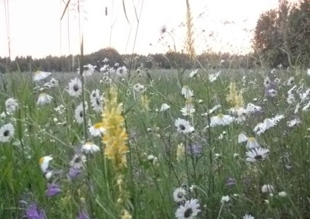Травы и росы,песни и кино)...