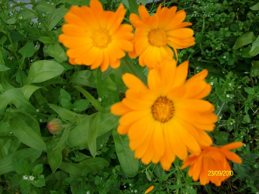 Из летнего:язык цветов)...