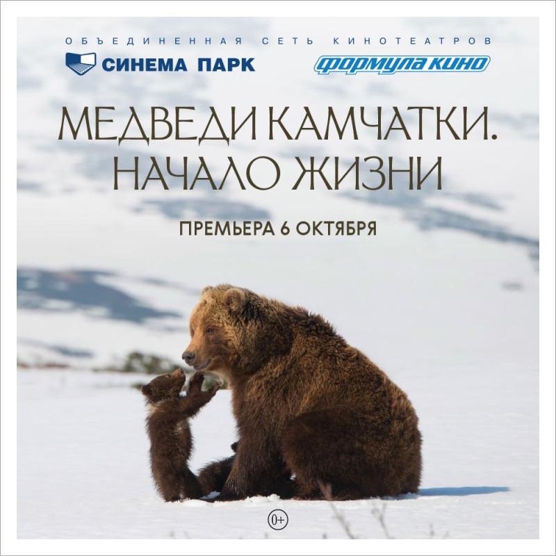 Пока медведи готовятся к спячке пойдем, посмотрим на них в кино!