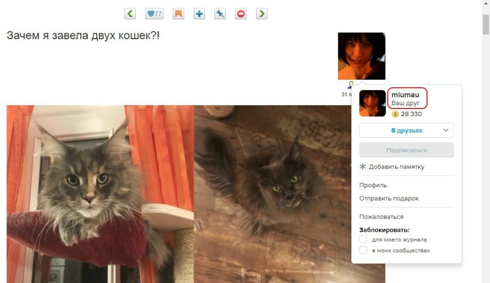 Яна Франк и её котики