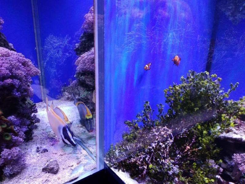Океанариум Риф в Анапе