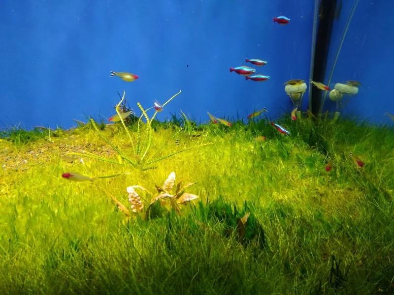 Рыбы-бабочки - Океанариум Риф в Анапе