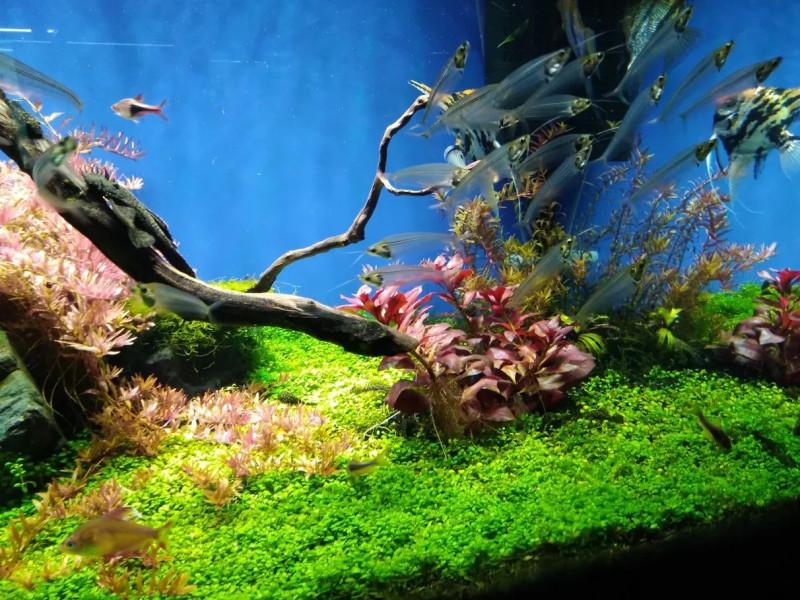 Прозрачные рыбы - Океанариум Риф в Анапе