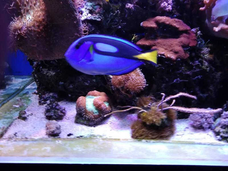 Голубой хирург - Океанариум Риф в Анапе