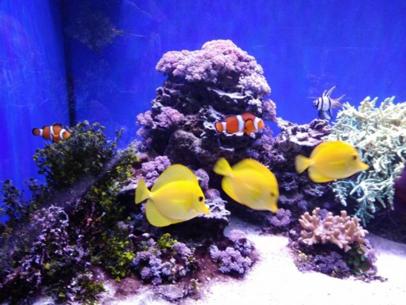Рыбы-клоуны - Океанариум Риф в Анапе