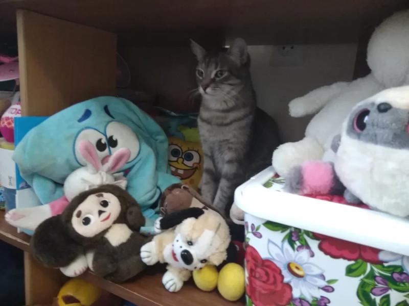 Сима в игрушках