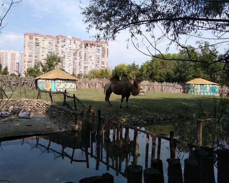Верблюд  - Сафари-парк в Краснодаре