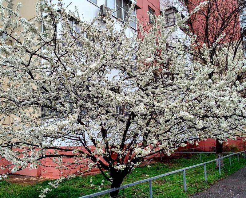 Апрель 2021 — Краснодар — Юбилейный микрорайон