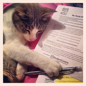 studycat