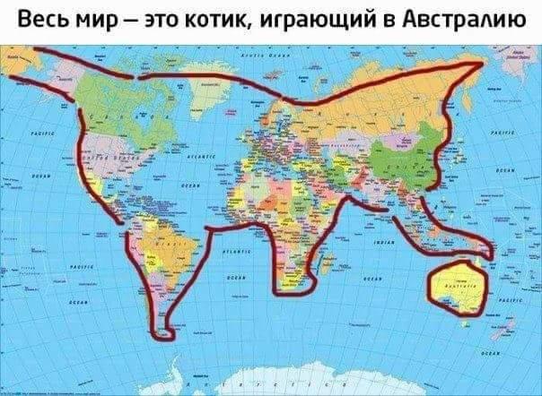 КОТИК С АВСТРАЛИЕЙ.jpg