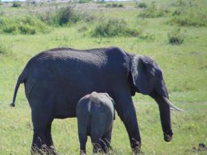 br_elephants