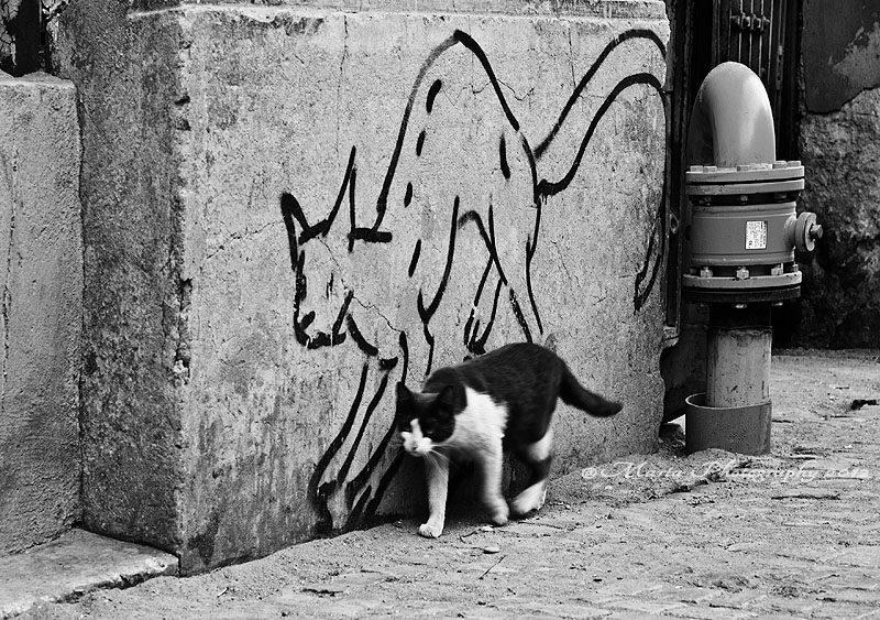 Street-Art-Cats
